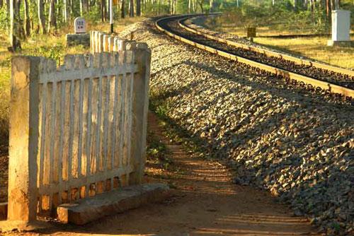 tracks1.jpg