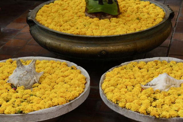 A marigold welcome