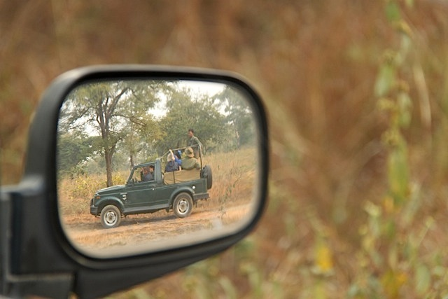 Ten reasons to love Panna Tiger Reserve