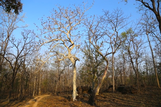 A weekend at Pench