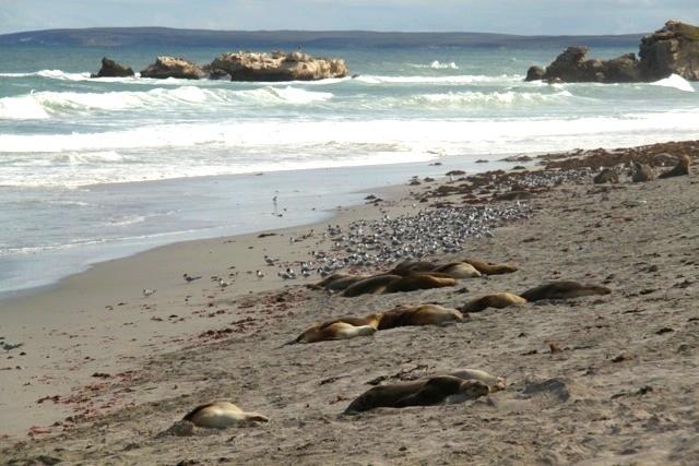 Sleeping seals