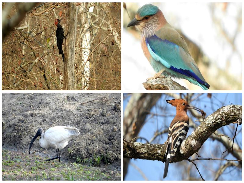 My top 10 wildlife experiences in 2016