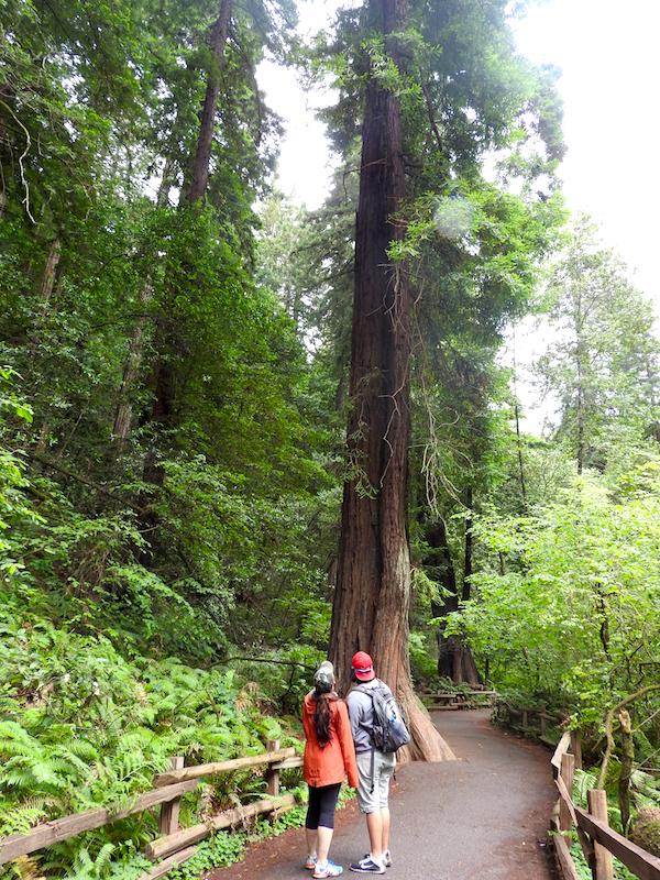 A walk in Muir Woods