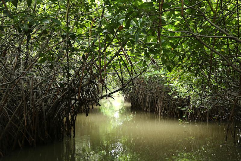 The mangroves of Pichavaram