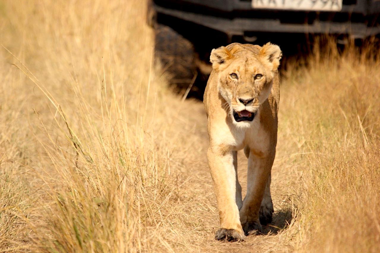 Photoessay: the Big 5 and more from Kenya