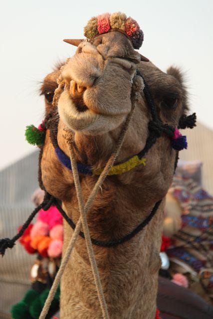 Camels, colour and a million gods