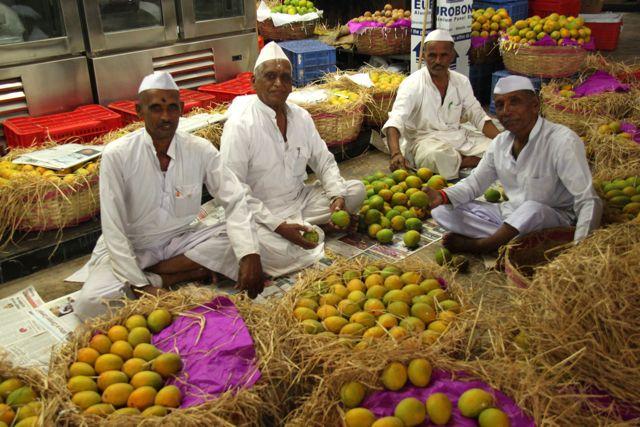 Mango mania in India