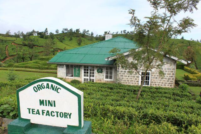 Hotels I love: Tea Factory, Nuwara Eliya