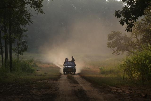 Friday photo: Safari