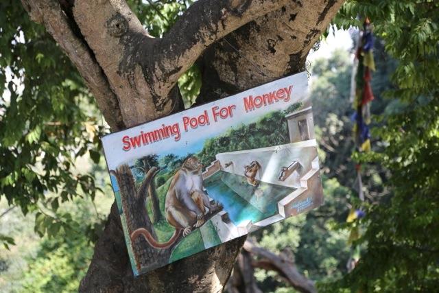 The monkeys swim here!